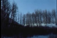 Panning shot of bare trees in winter stock video footage