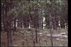 Panning shot of forest stock footage
