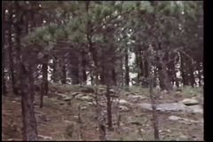 Panning shot of forest stock video footage