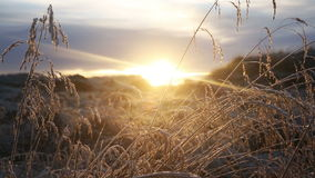 Panning slide scene of frosty grass and sunset stock video
