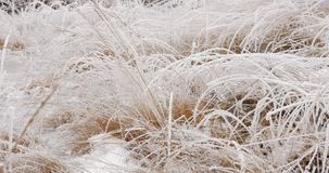 Panning snow and ice covered vegetation and water stock video