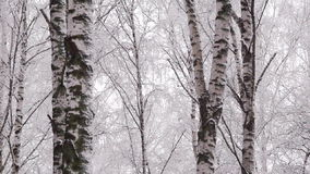 Panning snowy winter forest stock video