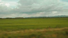 Panning strzał ryżowy pole w Costa Rica zbiory