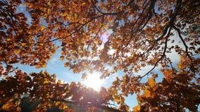Panning strzał treetops w jesieni, z spada liśćmi i słońca jaśnieniem przez ulistnienia zdjęcie wideo