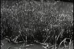 Panning swamp stock video footage