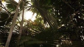 Panning tot de zon in weelderig tropisch regenwoud bij zonsondergang stock footage