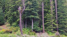 Panning up od zielonego leluja ochraniacza jeziora wierzchołek drzewa zdjęcie wideo