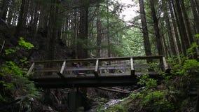 Panning van een jonge Kaukasische vrouw in sportkledingsjogging door altijdgroen bos over een houten brug wordt geschoten die stock videobeelden