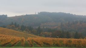 Panning video of vineyards in Dundee OR during colorful autumn season 1080p HD stock footage