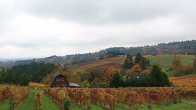 Panning video of vineyards in Dundee Oregon during colorful fall season 1080p HD stock video