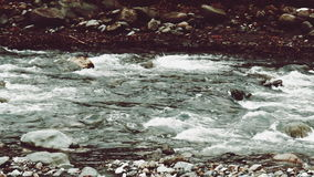 Panning view of rough mountain river in winter, Caucasus, Sochi stock video