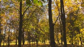 Panning w jesień parku zbiory wideo