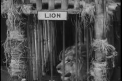 Panning wilde dieren in kooien stock videobeelden