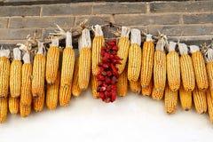 Pannocchie di granturco e peperoncini rossi, Cina Fotografie Stock Libere da Diritti