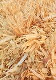 Pannocchie e foglie asciutte del cereale Immagine Stock