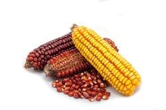 Pannocchie e semi di granturco Fotografie Stock