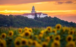 Free Pannonhalma Archabbey With Sunflowers Field At Sunset Time Stock Images - 154770274