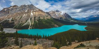Pano of the beautiful blue Peyto Lake in Banff National Park in Canada. Peyto Lake is a glacier-fed lake in Banff National Park in the Canadian Rockies that is royalty free stock photos