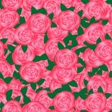 Pano blomma av rosor Fotografering för Bildbyråer
