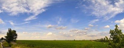 Pano de Vinefield Image libre de droits