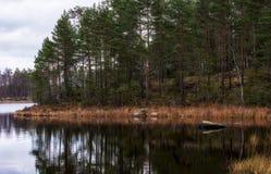 Pano della foresta Immagine Stock Libera da Diritti