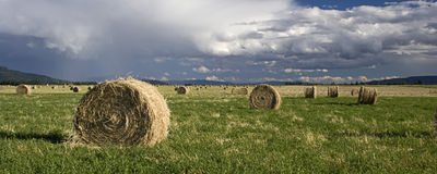 A pano of hay in a field. A panoramic image of large bundles of hay in a farm field Stock Photo
