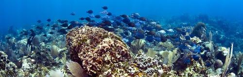 Panorámico subacuático Foto de archivo libre de regalías
