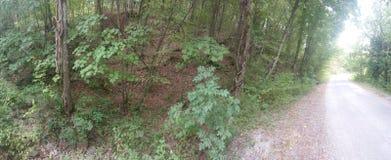 Panorâmico de um Forrest e de uma estrada fotografia de stock royalty free