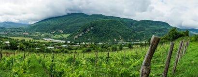 Panoram av den georgiska vingården Arkivfoto