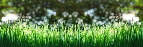 Panoram of green grass. Stadium and  soccer football on green grass field use as web site head background Royalty Free Stock Photos