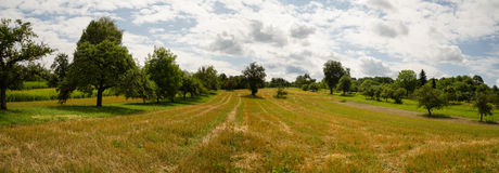Panoram Green orchard. In countryside landscape Royalty Free Stock Photos