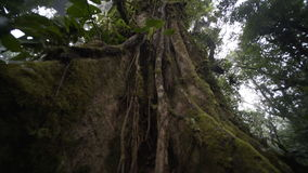 Big tree in rain forest