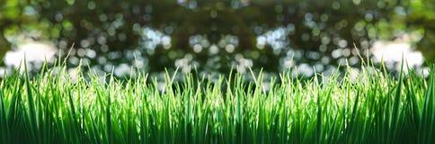 Panoram zielona trawa Zdjęcia Royalty Free
