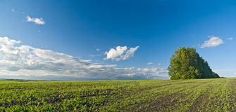 panorama łąkowa Zdjęcia Royalty Free