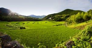 panorama śródpolni ryż Zdjęcia Stock
