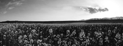 Panorama. Black and white landscape panorama Royalty Free Stock Photography
