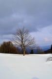 panorama Fotografering för Bildbyråer