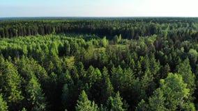Panorama aéreo en el bosque y el pantano verdes, naturaleza septentrional almacen de video