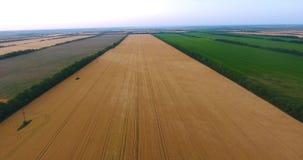 Panorama aéreo ilustrado de campos del trigo de oro entre plantaciones del bosque con perspectiva sin fin almacen de metraje de vídeo
