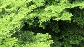 Panorama aerial view of Beautiful summer breeze on nature green leaves video footage clip. stock video footage