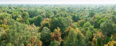 Panorama, aerial view. Sunrise shines down around peat swamp forest, beautiful shaped, shadow and green canopy. Sirindhorn Peat. Swamp Forest Nature Research stock photos