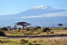 Panorama of the African savannah Royalty Free Stock Photos