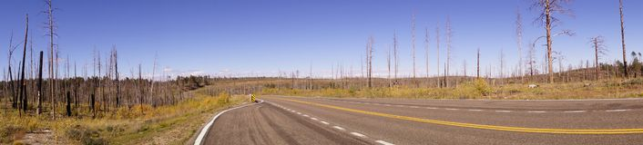 Panorama, Aftermath of forest fire Stock Images