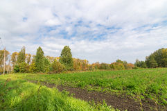 Panorama of agricultural field in summer Sunny day Stock Photos