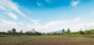Panorama, agriculture with clouds and blue sky Stock Photos