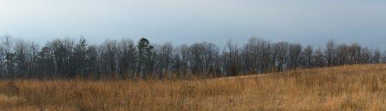 Panorama al parco nazionale dei terreni paludosi Immagine Stock