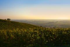 Panorama alemán del campo del vino Fotografía de archivo