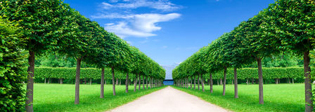 Panorama alley in the Park Royalty Free Stock Photo