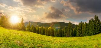 Panorama of alpine forest glade at sunset. Beautiful early autumn landscape in Carpathian mountains. joyful vacation in wilderness Stock Image