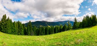 Panorama of alpine meadow in forest on hill. Beautiful early autumn landscape in Carpathian mountains. joyful vacation in wilderness Royalty Free Stock Images